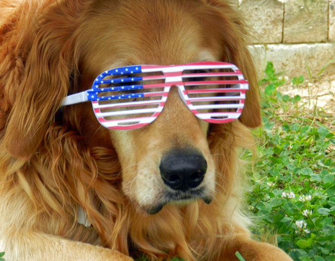 Dog with Glasses - Authenticity in Content Marketing