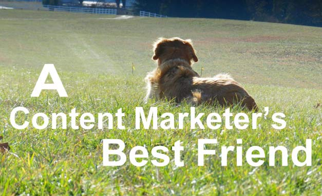 Dog looking out in field - perhaps contemplating content marketing